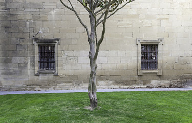 Tree trunk in a medieval courtyard