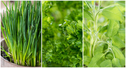 Different Herbs