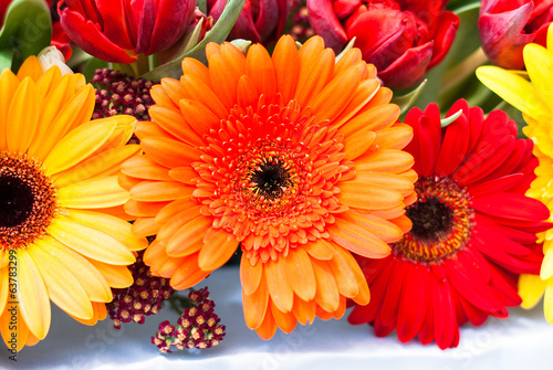 Gerbera Daisies - orange, yellow and red