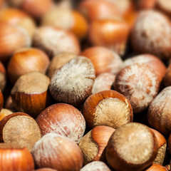 Hazelnuts background macro. Heap of hazel nuts background close
