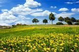 Fototapety Auszeit im Frühjahr: Pusteblumenwiese