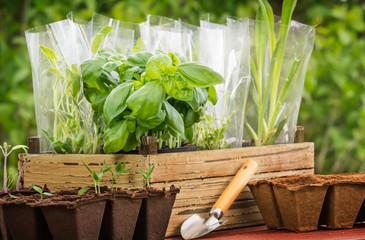 Gartenarbeit, Pflanzen