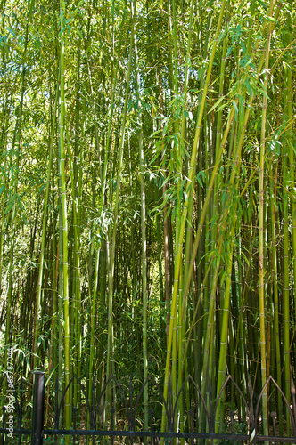 Foto op Canvas Bamboe Bamboo grove
