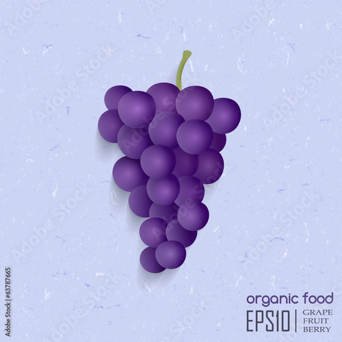 vector illustration of isolated grape.
