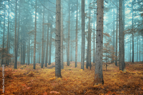 Dreamy conifer forest