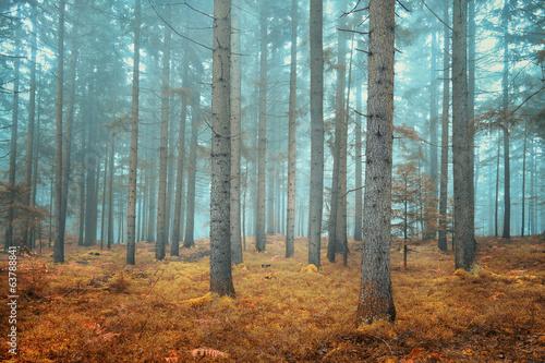 Keuken foto achterwand Bossen Dreamy conifer forest