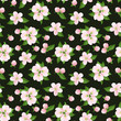 Seamless background with pink apple flowers. Vector illustration