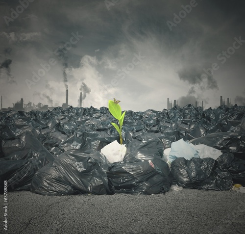Pollution and new life