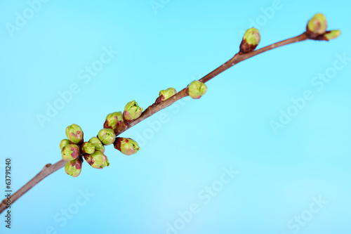 Leaf bud on blue background