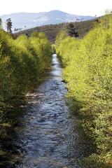 Aliseda en río Esperaban, Robledo, Hurdes, España