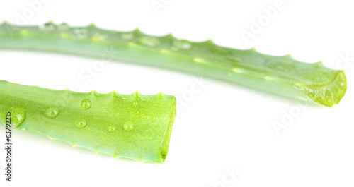 Fresh green aloe leaves with drops, isolated on white