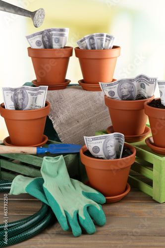 Business concept: growing money in the flowerpots and gardening