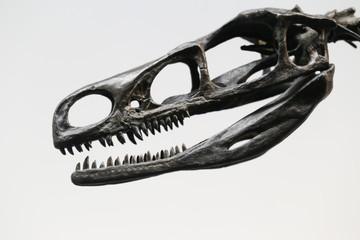 ドロマエオサウルス -Dromaeosaurus-