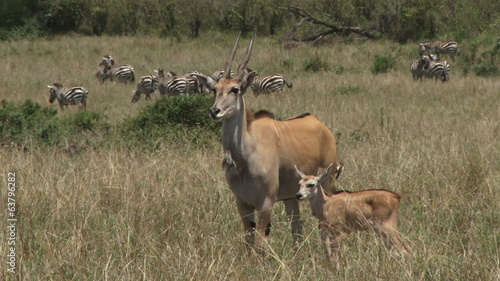 A large antelope with a baby