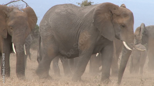 elephants in a dusty dry park