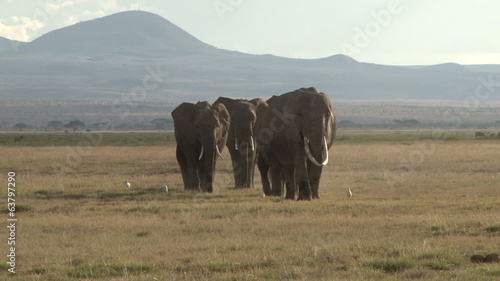 Elephants coming down to a swamp from kilimanjaro mountain