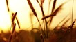 Prairie Grass and Sunset