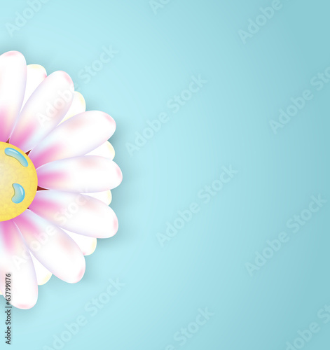 Spring abstract floral background with flower chamomile