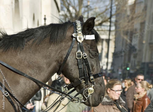 Queen's Horse Guard on duty.