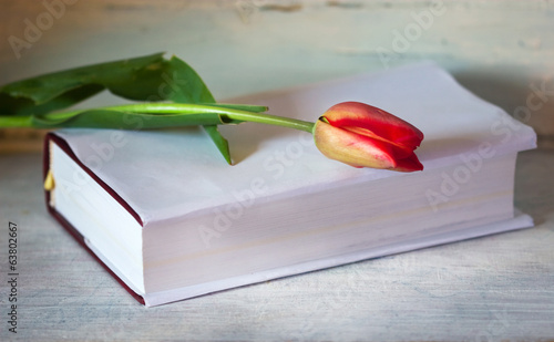 Spring tulip on the book