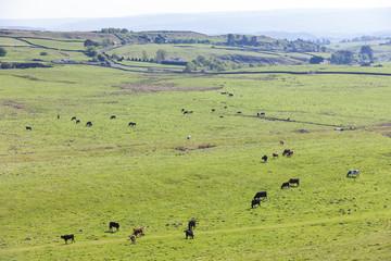 landscape near Hadrian's wall, Northumberland, England