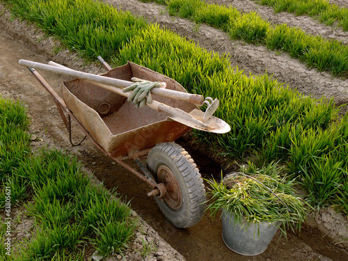 wheelbarrow with tools in a spring garden
