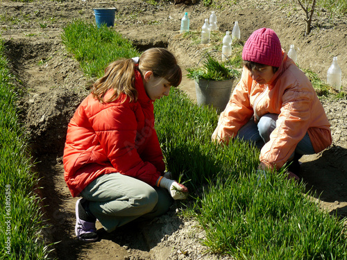 thinning out green manure for sowing seeds