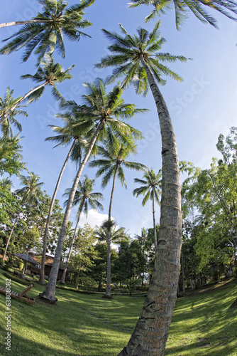 coconut tree fisheye view