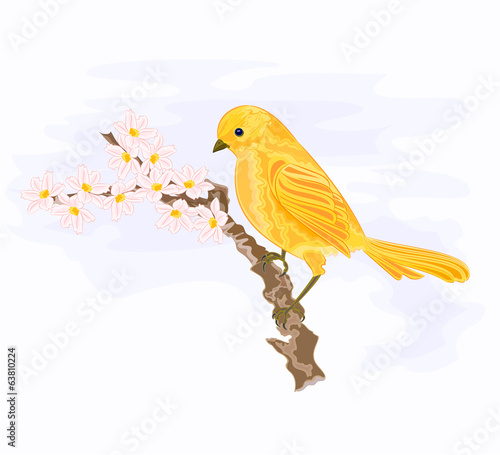 Bird on a branch with white flowers