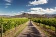 Hunter Valley vineyards - 63810426