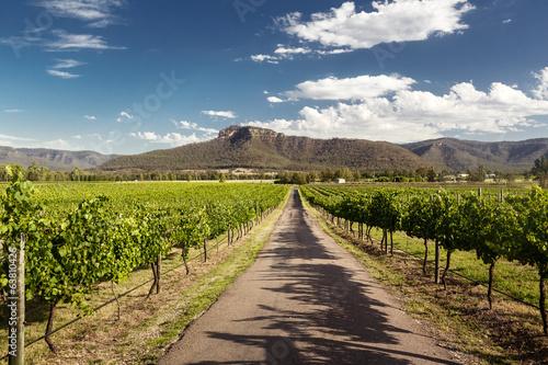 Leinwanddruck Bild Hunter Valley vineyards