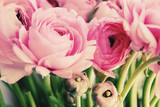 pink flowers - 63812488