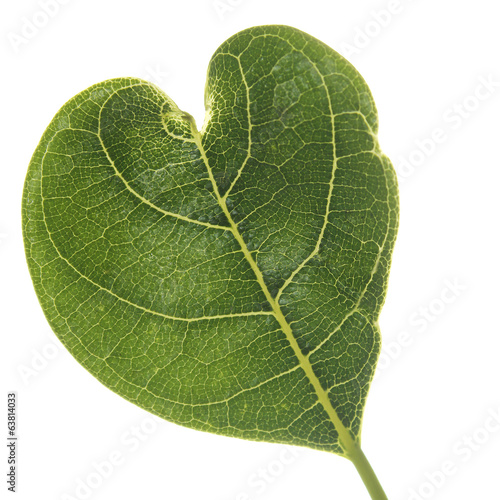 leaves heart shaped isolated on a white background