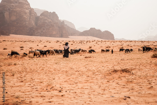 Shepards with drove cattle in Wadi Rum desert, Jordan