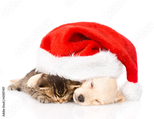 golden retriever puppy dog  and british cat with santa hat.