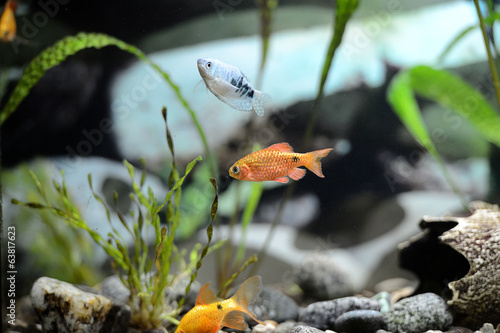 Cute little fish in an aquarium