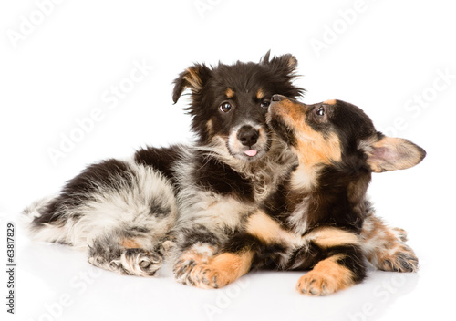 playing puppies. isolated on white background