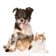 dog hugging cat. isolated on white background