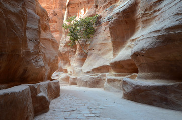 Jordania, Petra, gorge