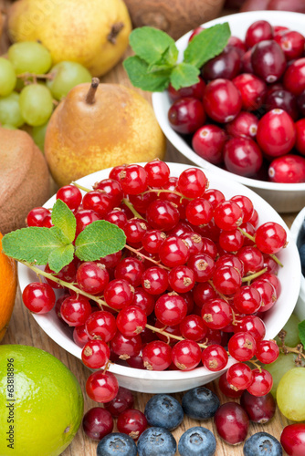 fresh red currant, berries and fruits