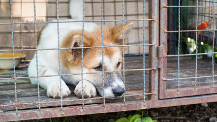 Dog in cage