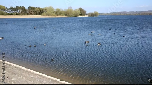 Birds at Chew Valley Lake and reservoir Somerset England UK