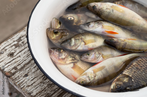 Fish in a white basin with water