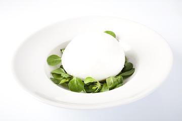 Mozzarella fresca su letto di valeriana