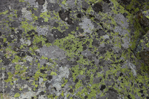 Green moss on the stone texture background