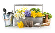 Spring flowers in wooden basket with garden tools. Isolated on