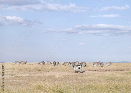 Zebras in Ol Pejeta Conservancy, Kenya