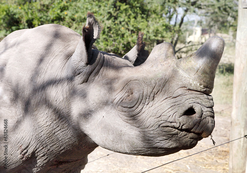 Closeup of a blind eye of Rhino kept at orphanage