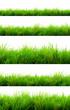 green grass summer isolated on white background