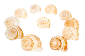 Circle of spiral shells isolated